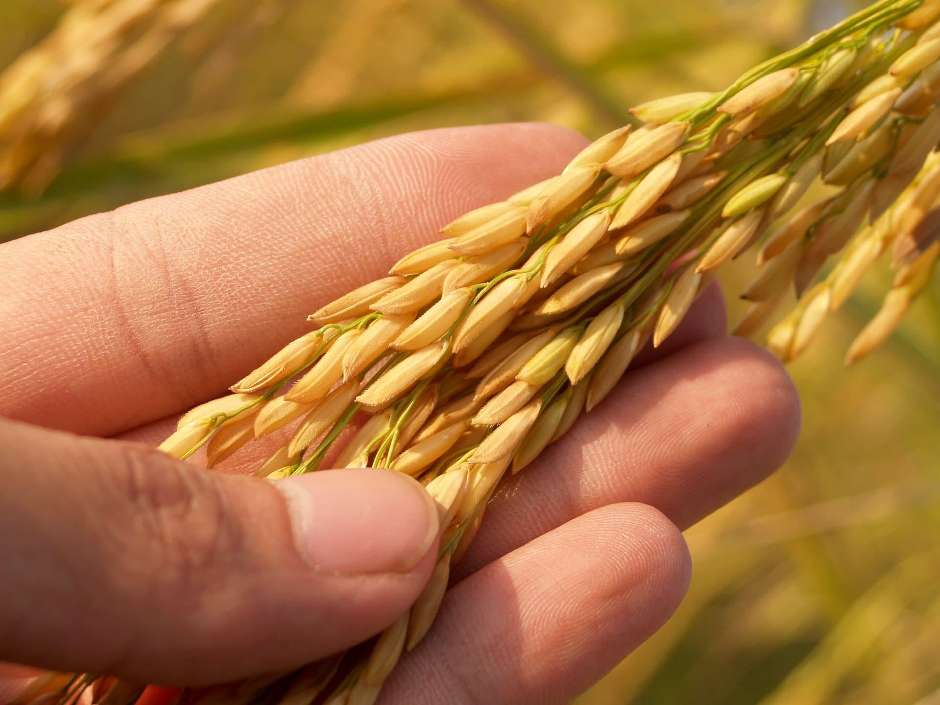 GMO Determination